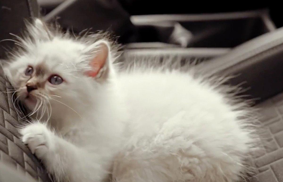 Hot_Cats_bigimg2