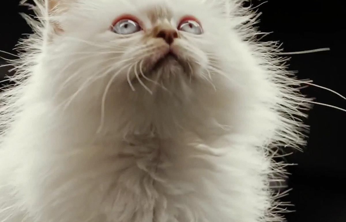 Hot_Cats_bigimg3