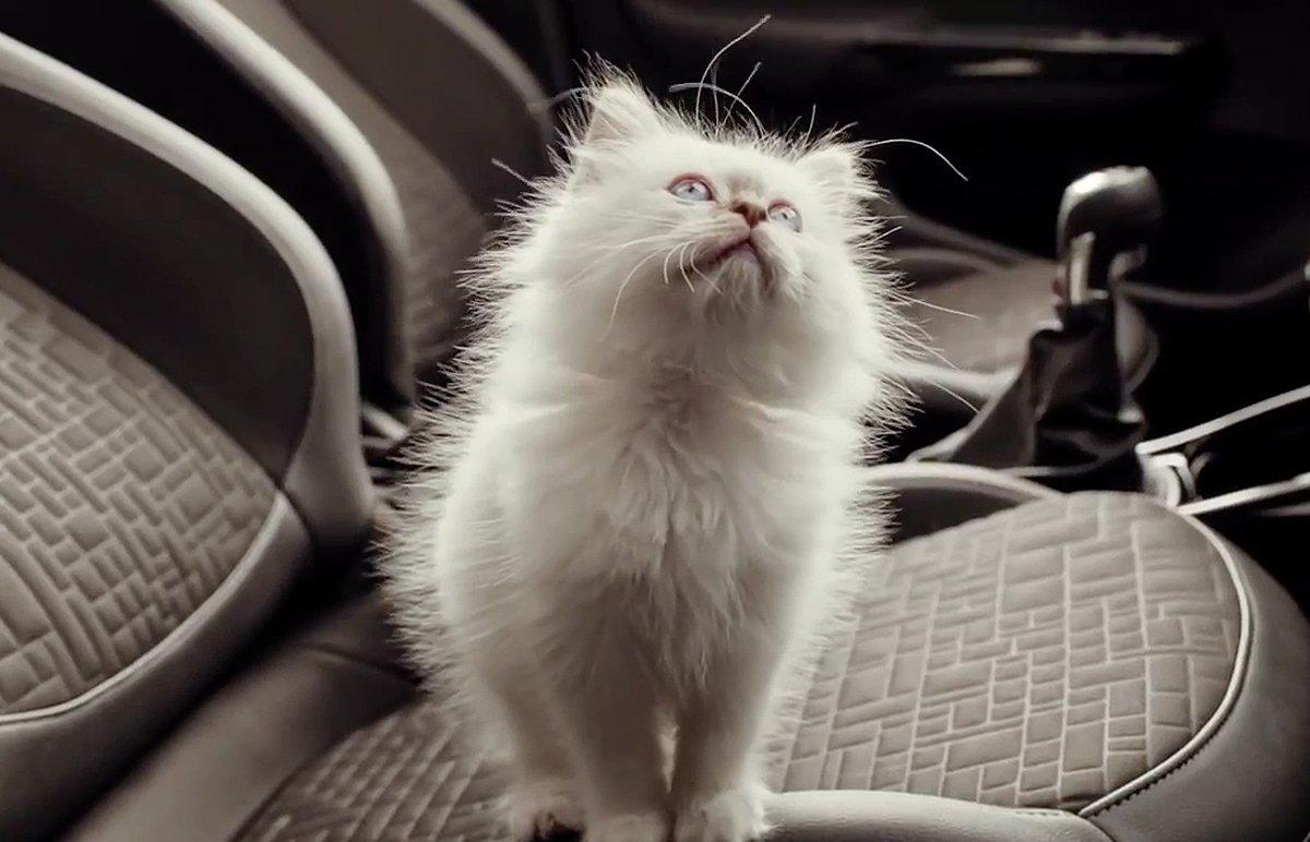 Hot_Cats_bigimg5