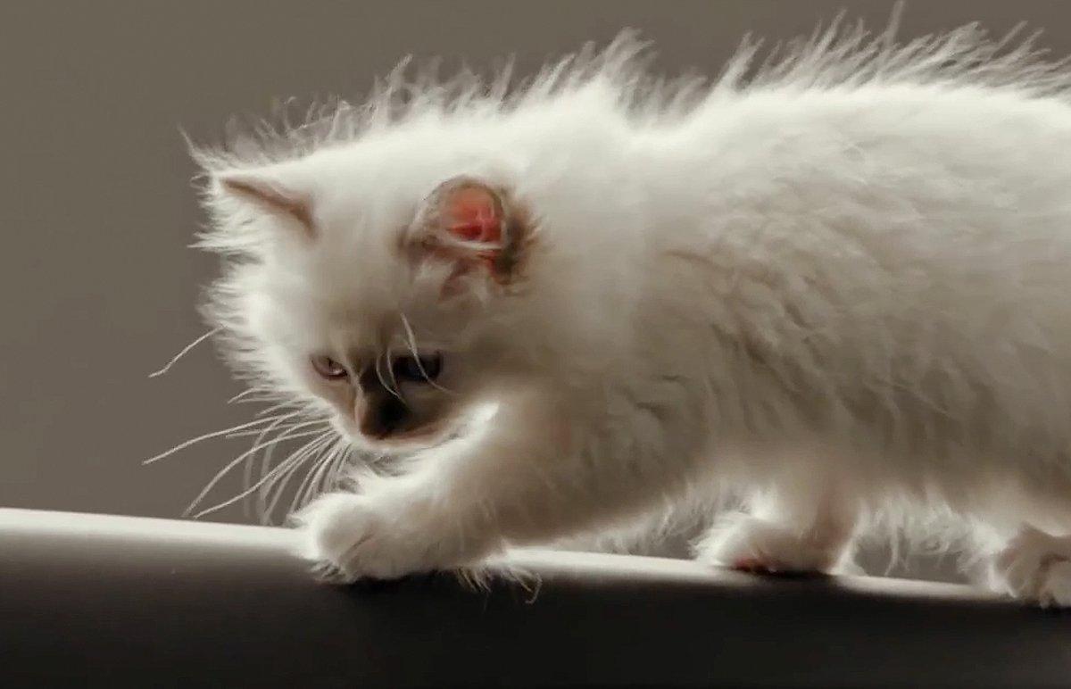 Hot_Cats_bigimg7